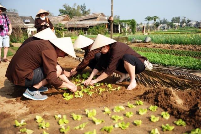 Nhiều du khách mặc quần áo đúng chất nông dân để tham gia trồng rau (Ảnh ST)