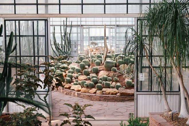 Vườn ươm xương rồng (Botanic Garden) (Ảnh ST)