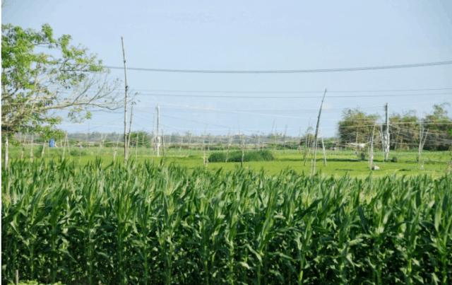 Làng rau Ngọc Lãng - Phú Yên (Ảnh ST)