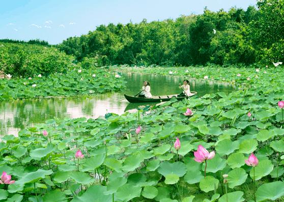 7 địa điểm du lịch Đồng Tháp đẹp 'hớp hồn' du khách