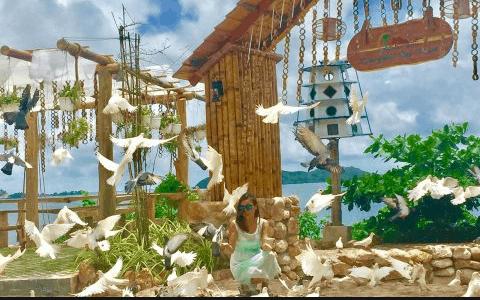 Vui chơi cùng bồ câu nuôi ở Humiso Nam Du