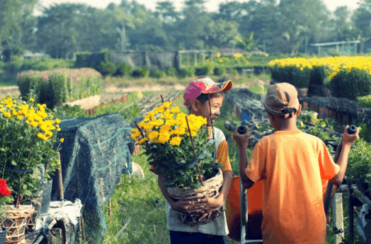 Săn lùng ảnh đẹp tại vườn hoa Cái Mơn
