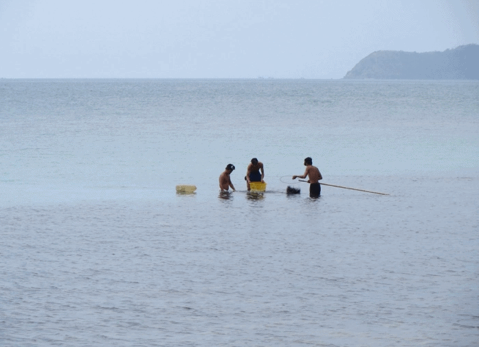 Capturing crabs and crabs in Hon Dau