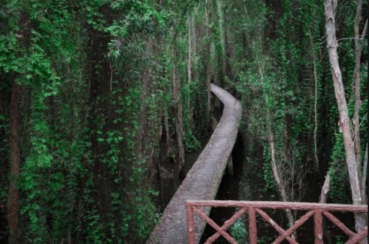 Con đường xuyên rừng tràm Tân Lập
