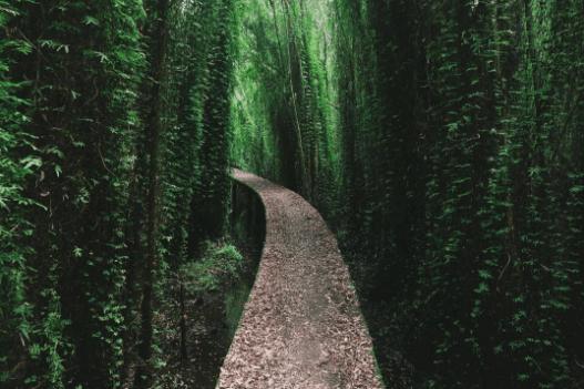Dọc 2 bên con đường xi măng là rừng tràm trải dài