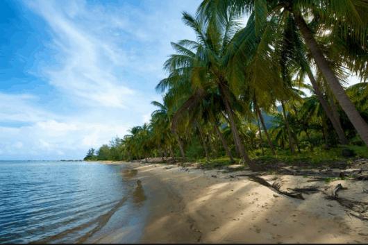 Hàng dừa thẳng tắp ôm ấp biển