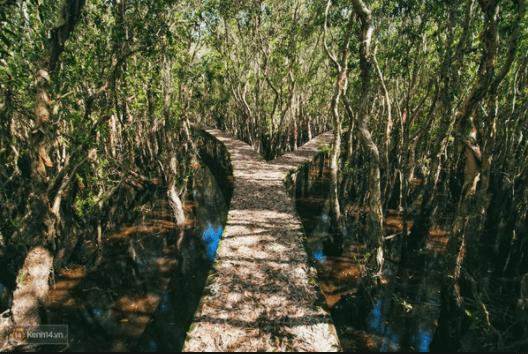 Con đường chạy xuyên rừng tràm được chia làm nhiều lối
