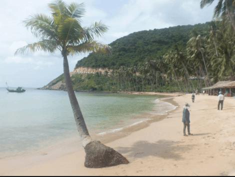 Hàng dừa nghiêng soi bóng xuống biển