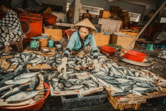 Những mẻ cá mới được bắt lên từ dưới biển