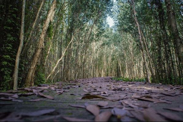 Mùa khô lá rụng che kín con đường