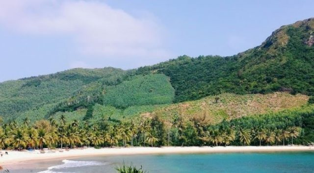 The beach is very open and spacious with no houses or shops, only coconut trees growing naturally here (Photo ST)