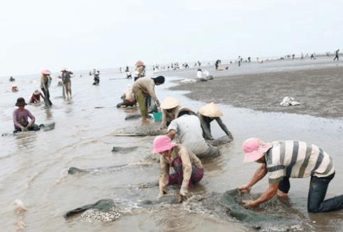 Bắt ngao cùng người dân tại biển Thừa Đức