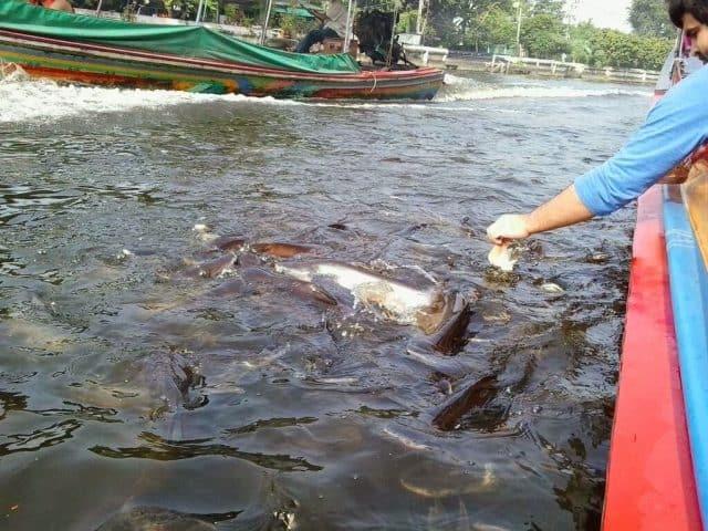 Cho cá ăn sẽ mang lại nhiều điều may mắn cho bạn và gia đình (Ảnh ST)