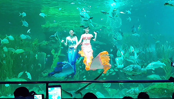 Chiêm ngưỡng màn trình diễn dưới nước tại Vinpearl Land