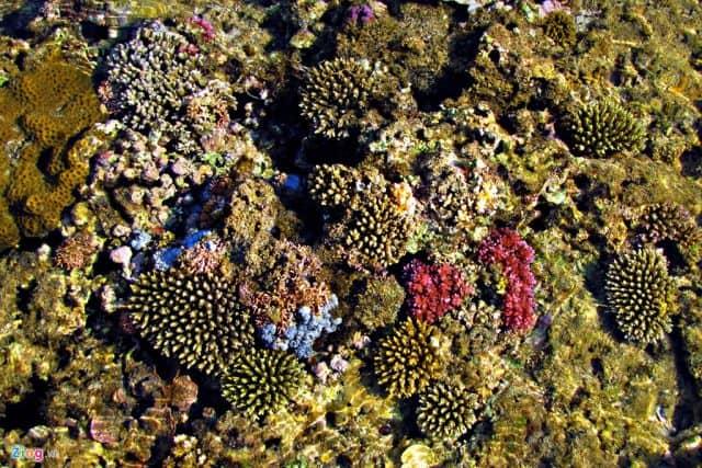 Thảm san hô nhiều màu sắc (Ảnh ST)