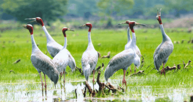 Du lịch Gáo Giồng chiêm ngưỡng các loài chim