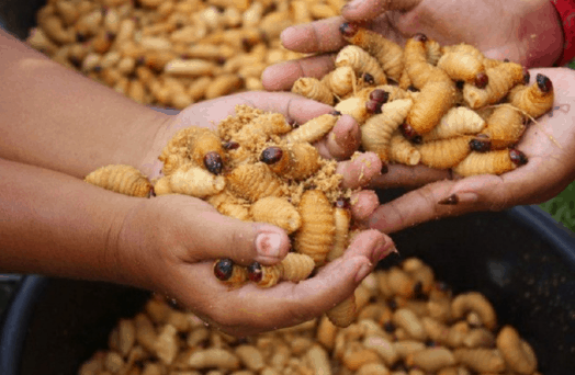 Đuông dừa - Món ăn độc lạ tại Bến Tre