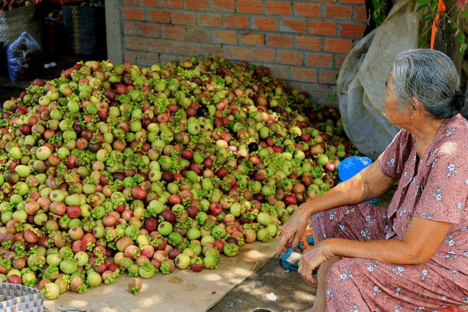 Giá trái cây tại miệt vườn Quê Ta chỉ bằng một nửa ở chợ