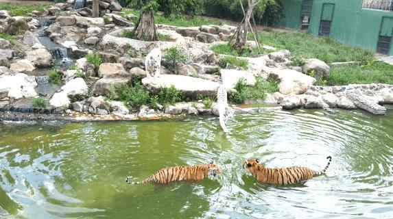 Khám phá vườn thú tại KDL Vườn Xoài