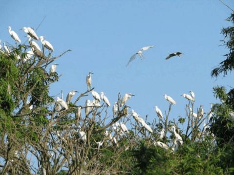 Khám phá cuộc sống các loài chim tại Vàm Hồ