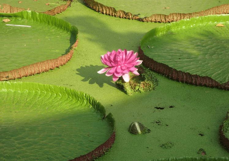 Ngắm hoa sen tại chùa Phước Khiển