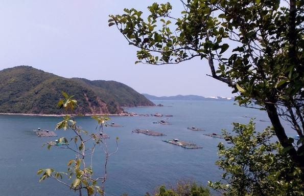 Ngắm nhìn cảnh biển, ghe tàu đi lại và những nhà bè nuôi tôm từ trên đảo (Ảnh ST)