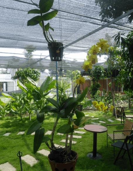 Quán MM Garden Cafe được bao phủ bởi cây xanh mát