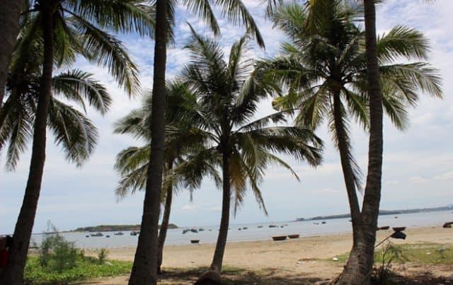 Những tán dừa rợp bóng xanh mát (Ảnh ST)