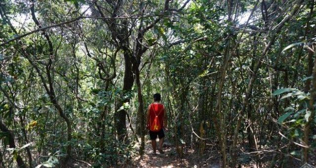 Đến đây và khám phá khu rừng nguyên sinh đa dạng, phong phú (Ảnh ST)