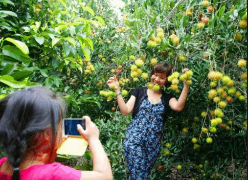 Chụp hình tại vườn trái cây Bến Tre