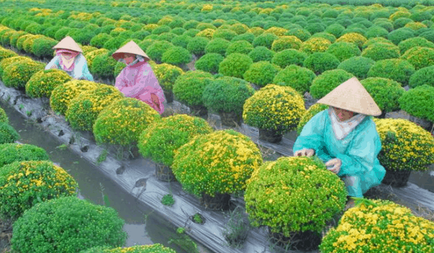 Tham quan vườn hoa kiểng tại Cái Mơn