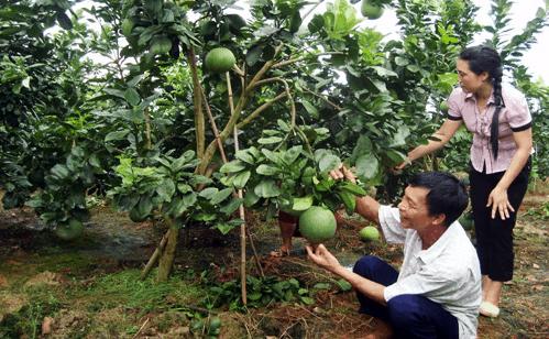 Theo chân nhà vườn khám phá cách trồng cây trái hiệu quả