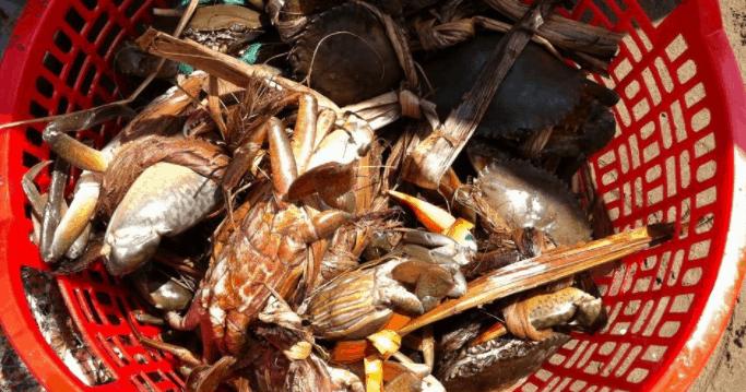Thưởng thức những món hải sản tươi ngon tại biển Ngọc Thạnh Phú