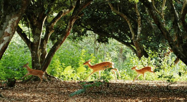 Vườn quốc gia Nam Cát Tiên 5