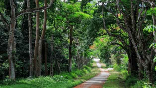 Vườn quốc gia Nam Cát Tiên 6