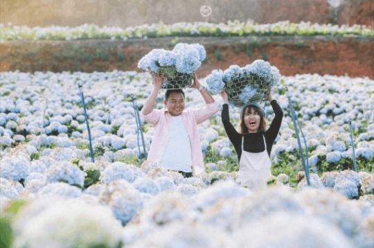 vườn hoa Cẩm Tú Cầu tại khu du lịch Bửu Long