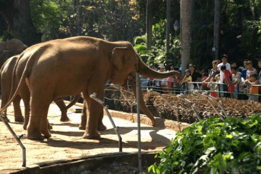 Thảo Cầm Viên là nơi tham quan, du lịch lý tưởng cho các gia đình