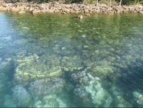 Hòn Hai Bờ Đập Nam Du phong phú và đa dạng với rạn san hô trù phú