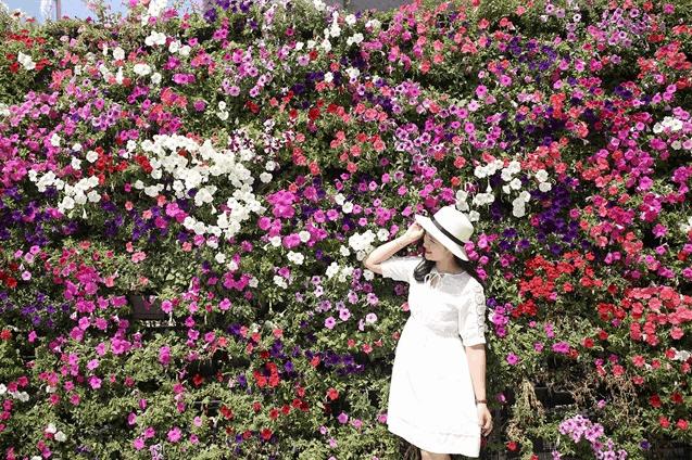 Backgroud siêu đẹp tại vườn hoa Bửu Long