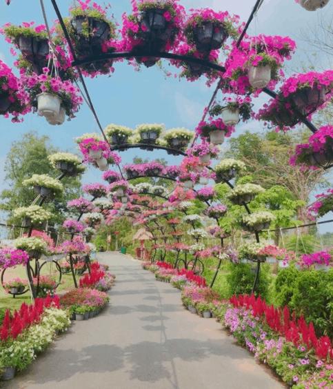 Con đường hoa màu sắc tại khu du lịch Bửu Long