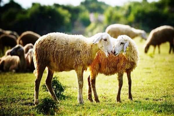 Đồi cừu Vũng Tàu - địa điểm chụp hình chất từng centimet