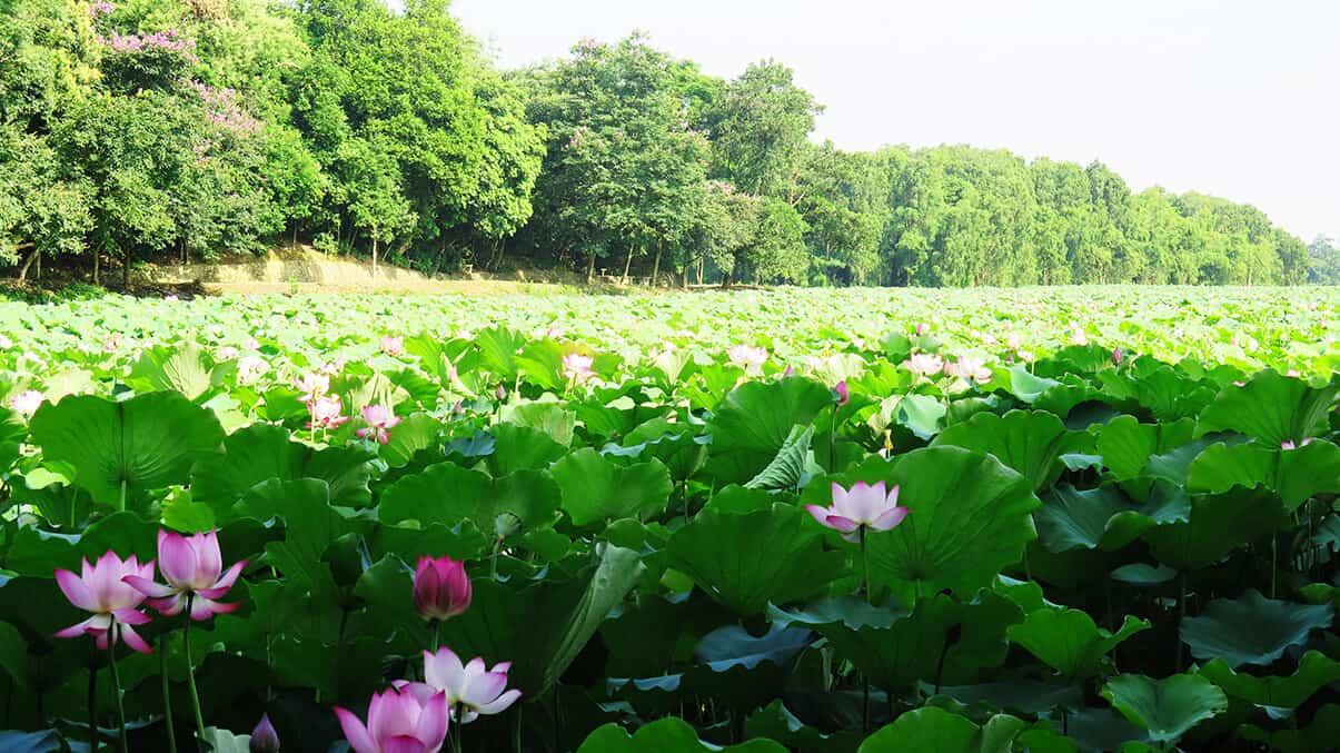 Theo kinh nghiệm đi rừng Bằng Tạ, bạn có thể kết hợp du lịch với các địa điểm khác như Ao Vua, hồ suối Hai,...