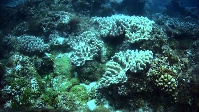 Hoạt động lặn ngắm san hô rất thú vị (Ảnh ST)