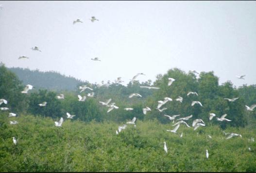 vườn quốc gia lò gò xa mát