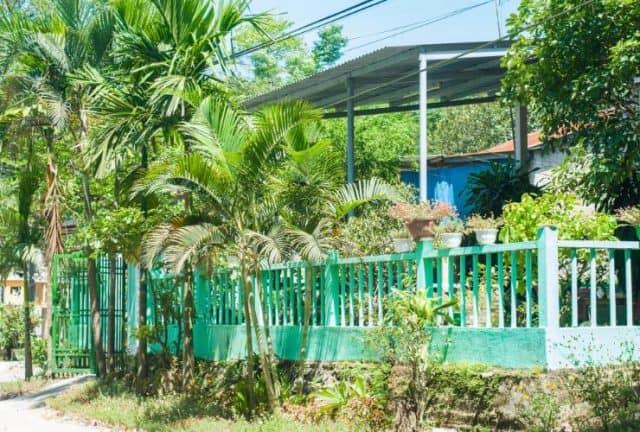 Không gian sống xanh tại Green Field Homestay (Ảnh: ST)
