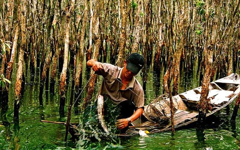 câu cá rừng u minh hạ