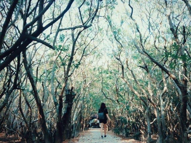 Không gian xanh ngát của rừng ngập mặn Rú Chá. (Ảnh: ST)