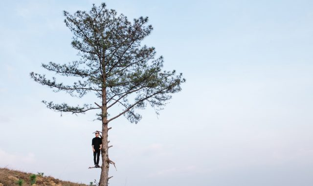 The pine tree ... not alone!  (Photo: ST)