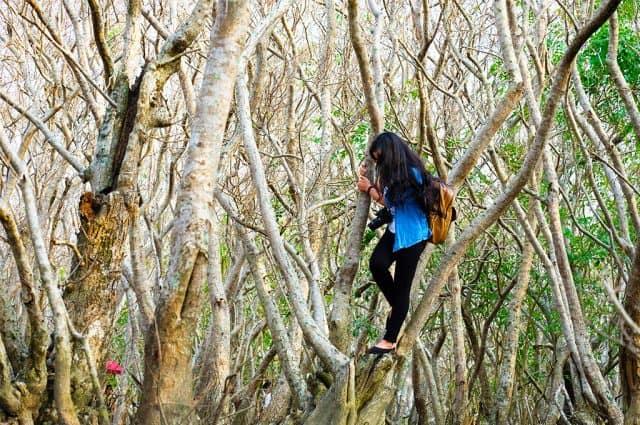 Đi sâu vào rừng, khám và từng gốc chá, rừng cây. (Ảnh: ST)