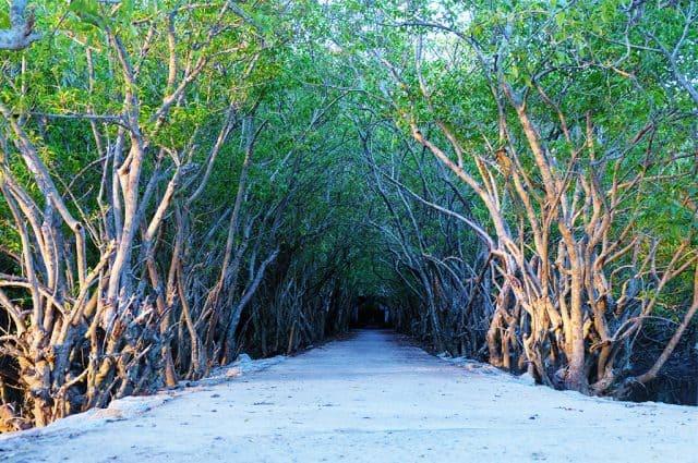 Con đường rợp bóng cây nên thơ ở rừng Rú Chá. (Ảnh: ST)